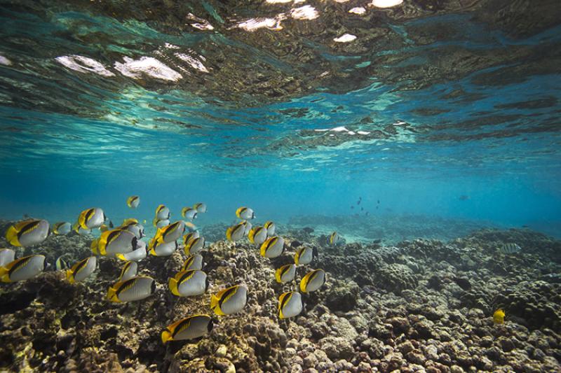 hawaii-corals-750x500-credit Christine Shepard.png