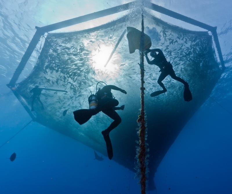 Hawaiian Net Pen Courtesy of Blue Ocean Mariculture.jpg