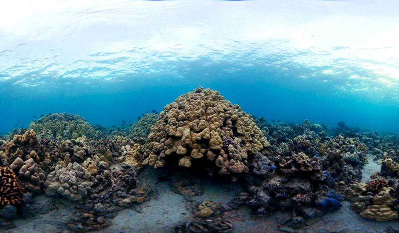 healthy-coral-reef-ecosystem-west-hawaii-800x467.jpg