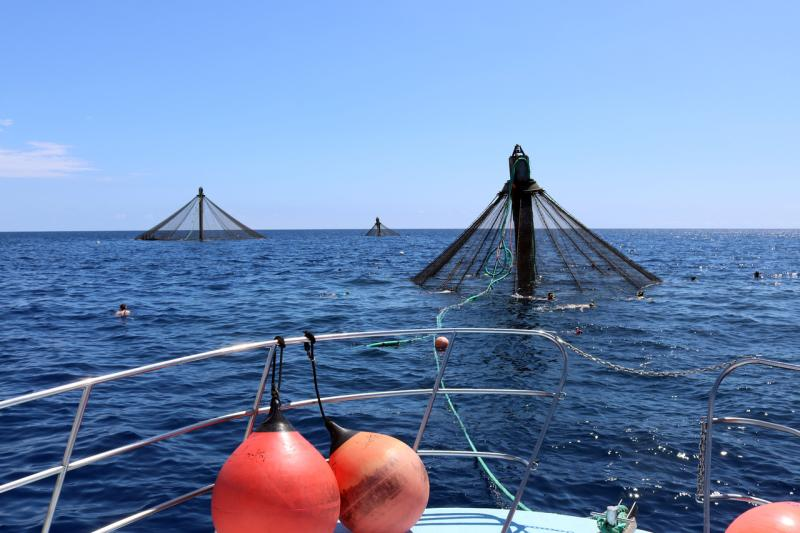 Three aquaculture net pens poke above the water's surface.