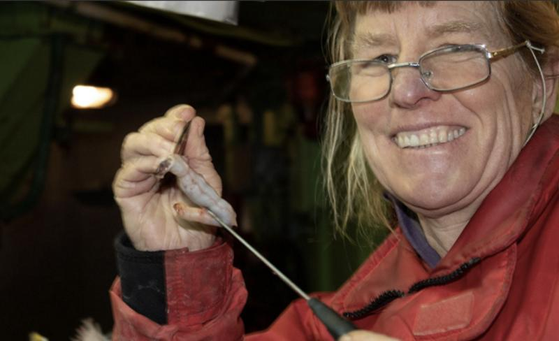 Laurie-Weitkamp-examining-stomach-contents-from-chum-salmon-NWFSC-2019.jpg