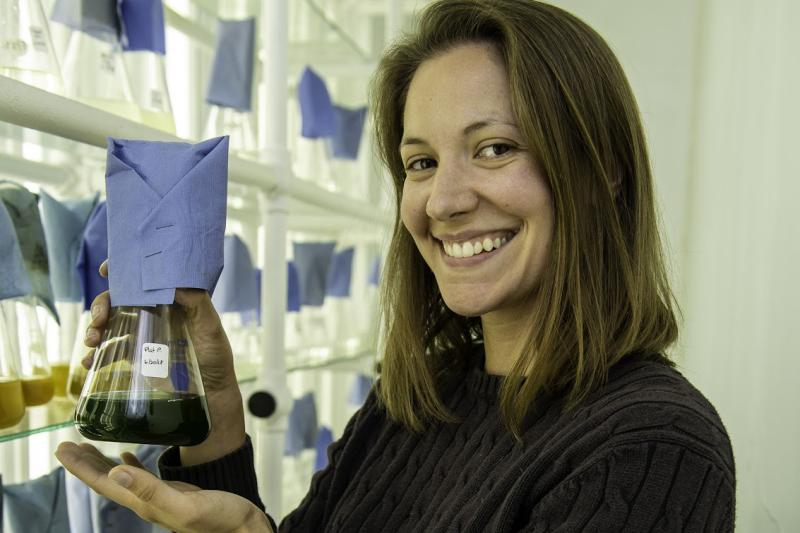 Milford collection of algae cultures, Lisa is showing one beaker of green algae.