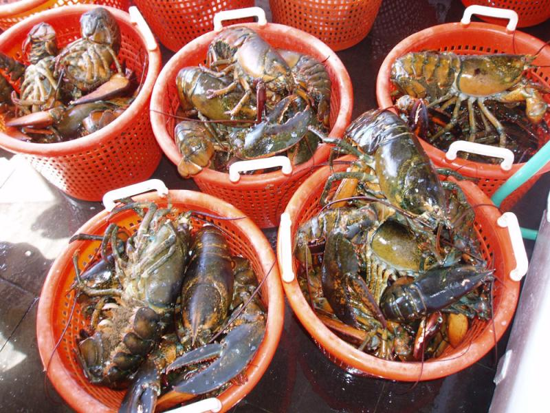 lobster4_fullsize.jpg