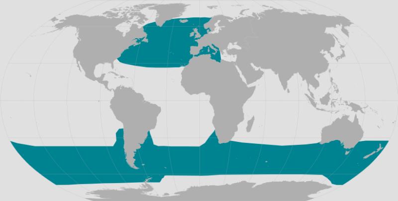 Long-finned Pilot Whale Range.png