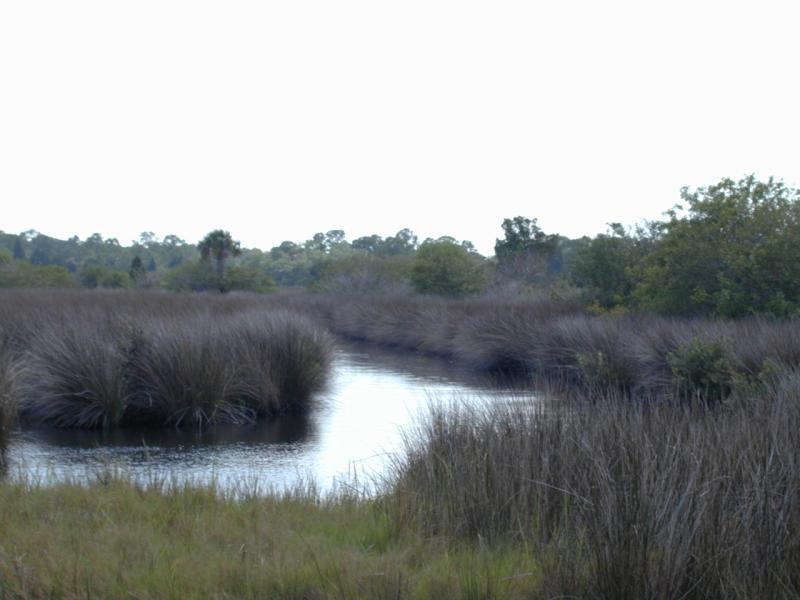 Marshesphoto.jpg