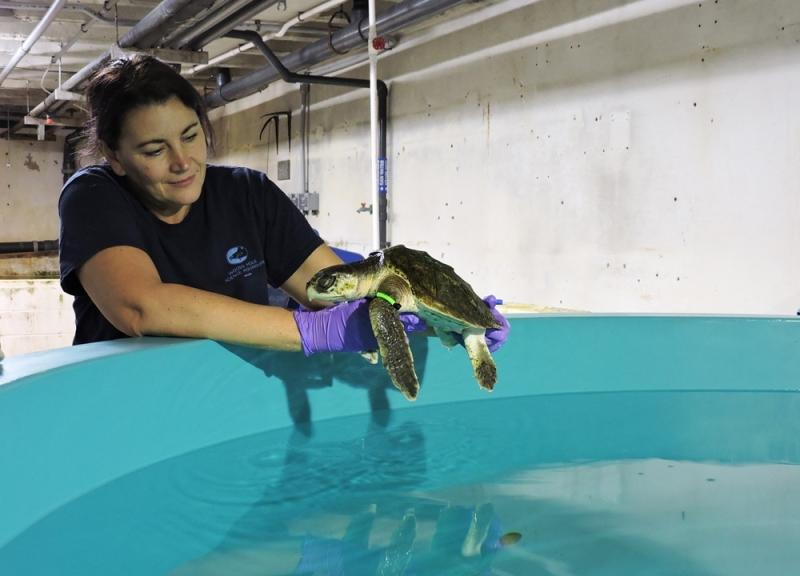 Michele placing turtle back into the tank.