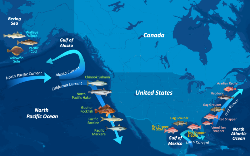 Near-Infrared_Tech_Otolith_Fish_ID_13-species_US-waters_map.png