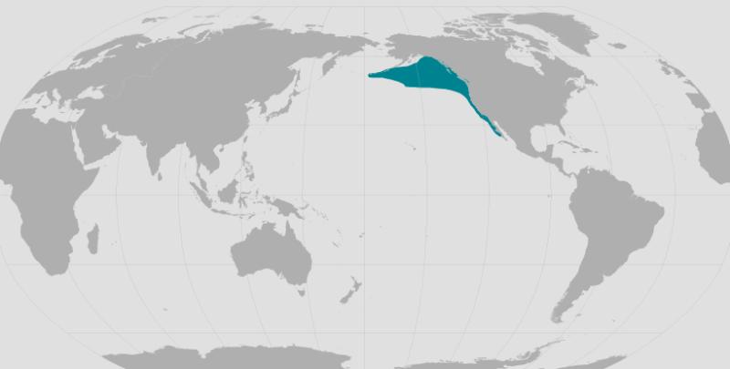 Northern Elephant Seal Range.png