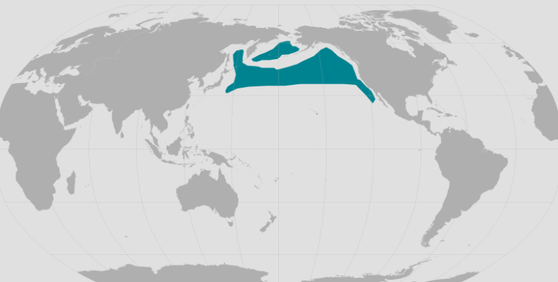 Northern Fur Seal Range.png