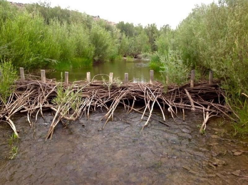 nwfsc-feature-oregon-beaver-dam.jpg
