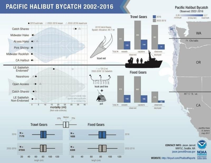 nwfsc-feature-pacific-halibut-infographic.jpg