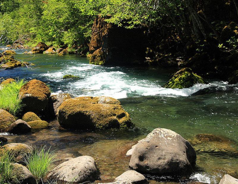 nwfsc-feature-puget-sound-salmon-riverine.jpg