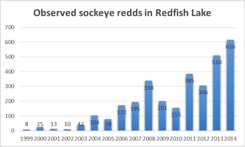 nwfsc-feature-redfish-sockeye.jpg