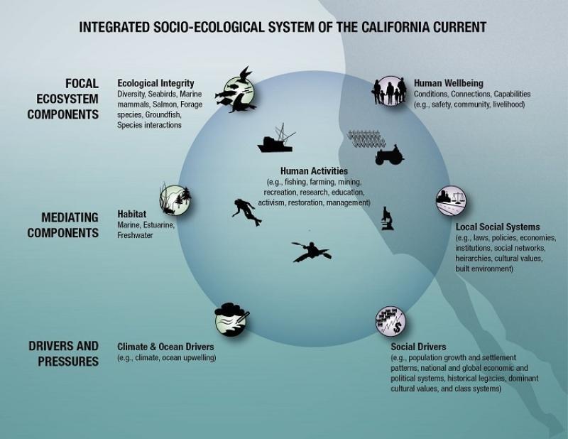 nwfsc-feature-report-california-current.jpg