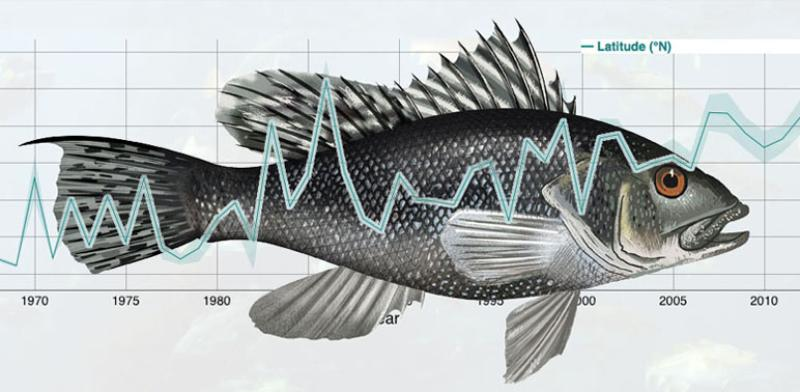 oceanadapt_trackingfish_b.jpg