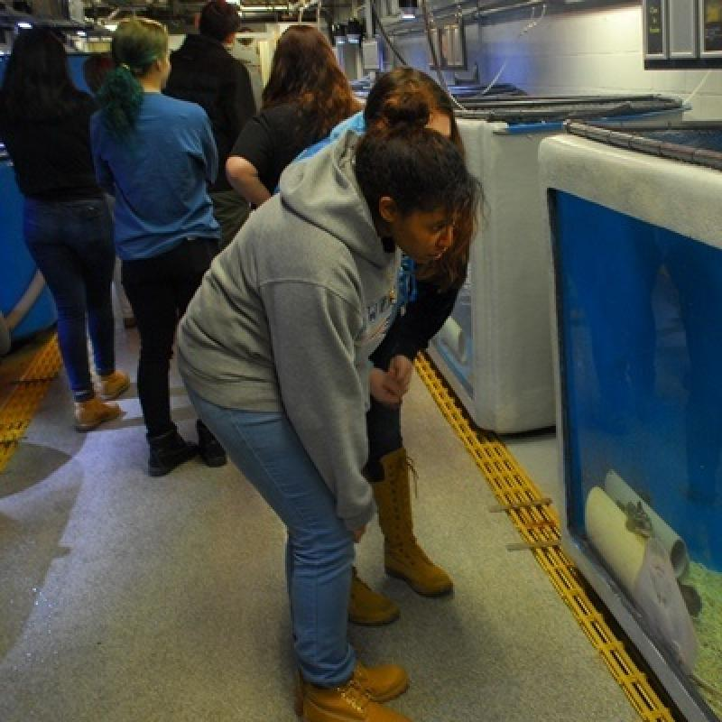 Behind the aquarium wall, students checking the view of the tanks from the backside.