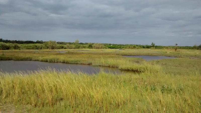 restored marsh in Florida after hurricane matthew.jpg
