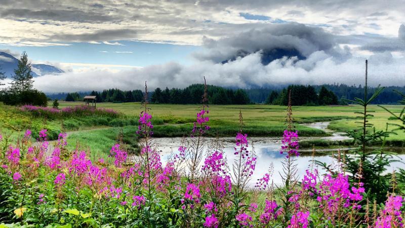 ryamada_wetlands.jpg