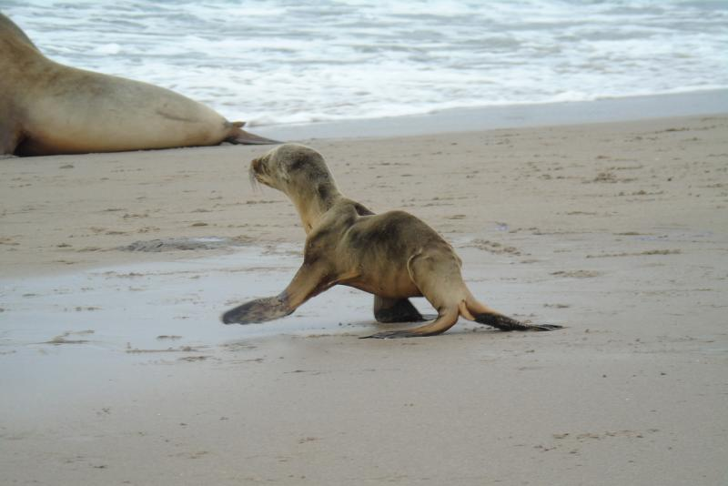 Sea lions 2.jpg