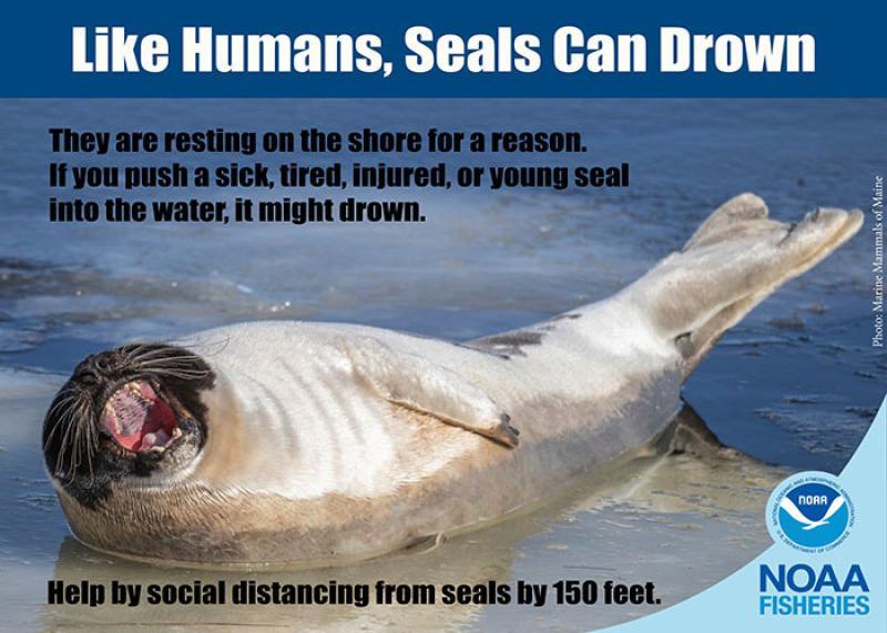 Seals can drown_700x500.jpg
