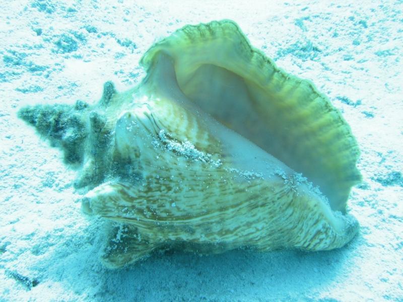 Shell-Gulf-SGIGA-SERO.jpg