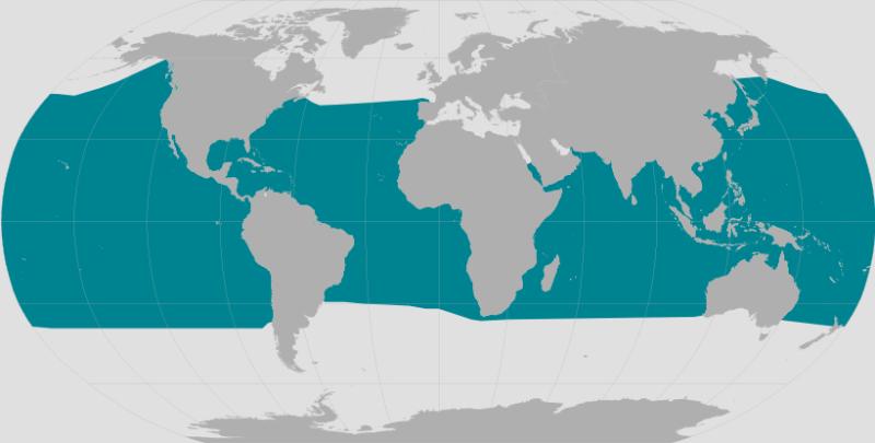 Short-finned Pilot Whale Range.png