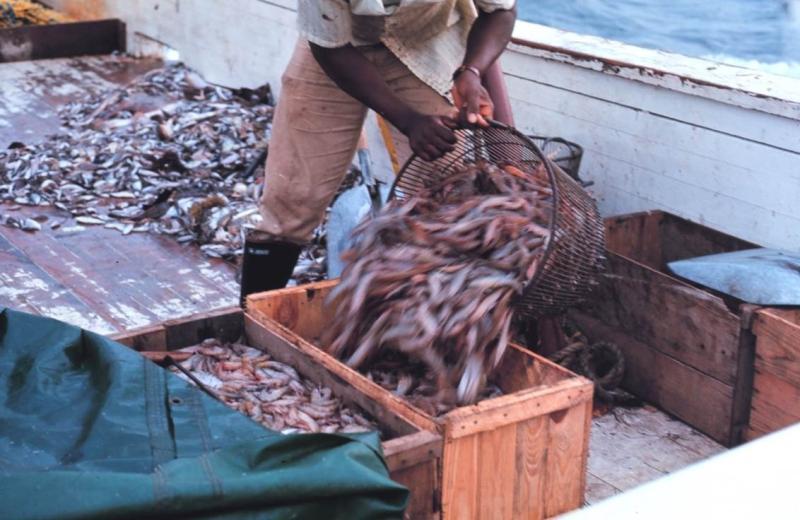 shrimp-fishing-SA-SERO.jpg
