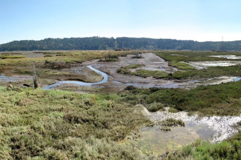 skokomish-estuary-restoration_750x500.jpg