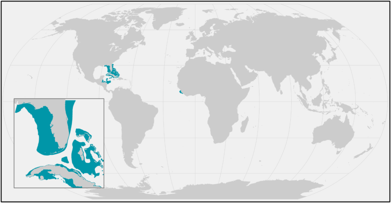 SmallToothSawfish_current_range.png