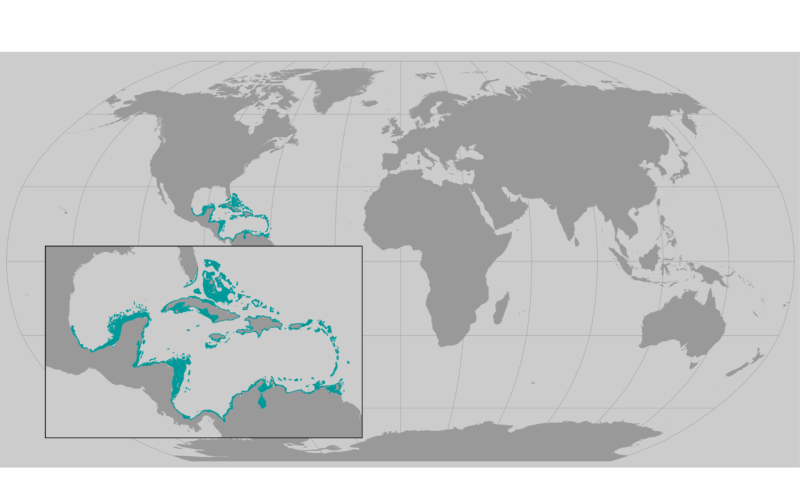 staghorn_coral_revised.png