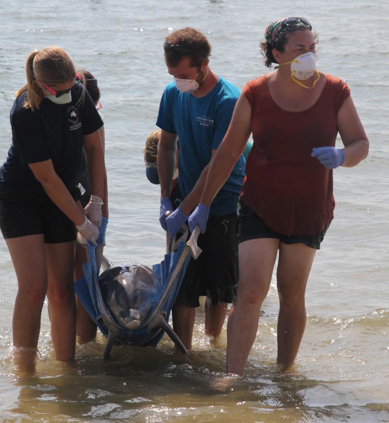Virginia Aquarium and Marine Science Center_Live Dolphin.jpg