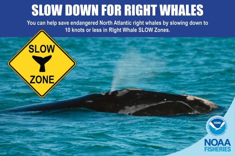 WEbstory opening pic slow zones_2.jpg