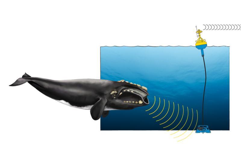 whale-buoy-comic-web_454233.jpg