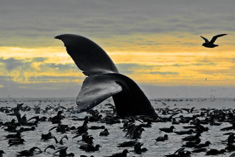 Whale-thumb.jpg