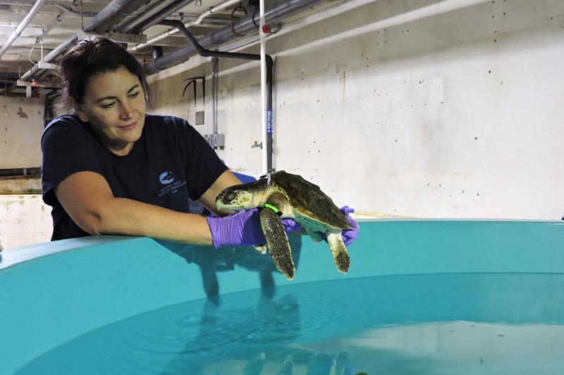 whsa-turtle-swim-test.jpg