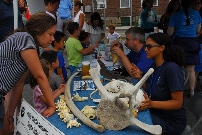 Table with whale bones and information hosted by NOAA staff during the Woods Hole Stroll.