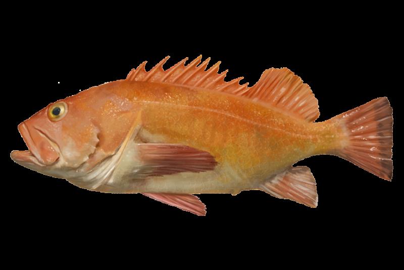 yelloweye-rockfish.png